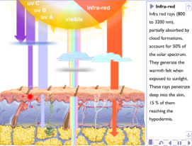 The Sun's Rays and Skin Damage